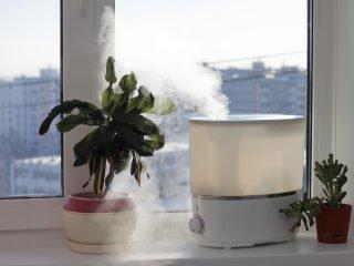Чем полезны увлажнители воздуха и в чем их опасность