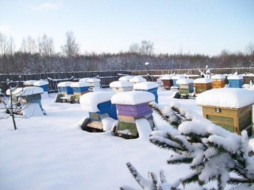Пчелиные улья зимой