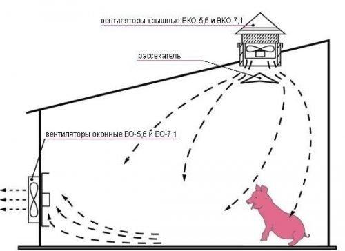 Схема вентиляции секции в свинарнике
